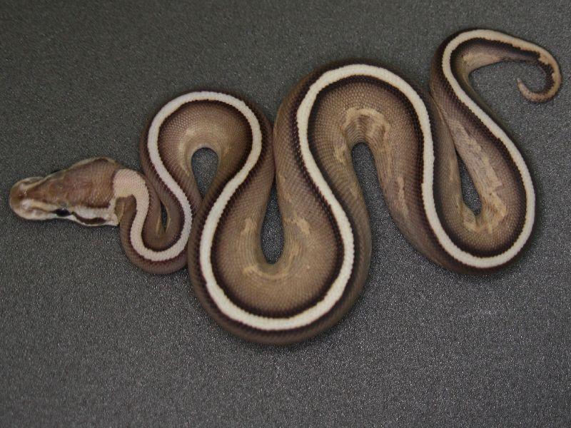 Tierbilder Bild Von Anna Plociennik Auf Reptile Anphibe Tiere Schlangen