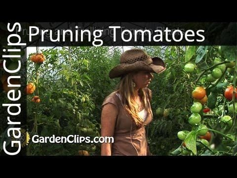 How To Prune Tomatoes - YouTube