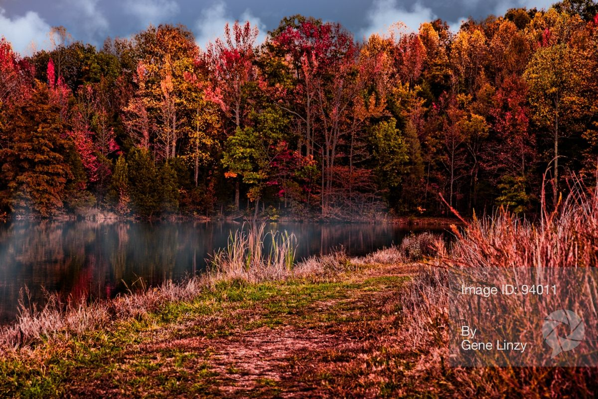 photorankr – Misty Fall Morning by Gene Linzy | My ...