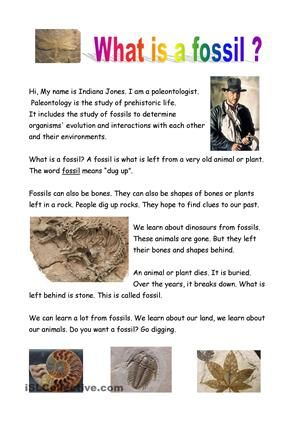 What Is A Fossil Fossils Lesson Fossils Lesson Plans Fossils Activities Fossil worksheets 4th grade