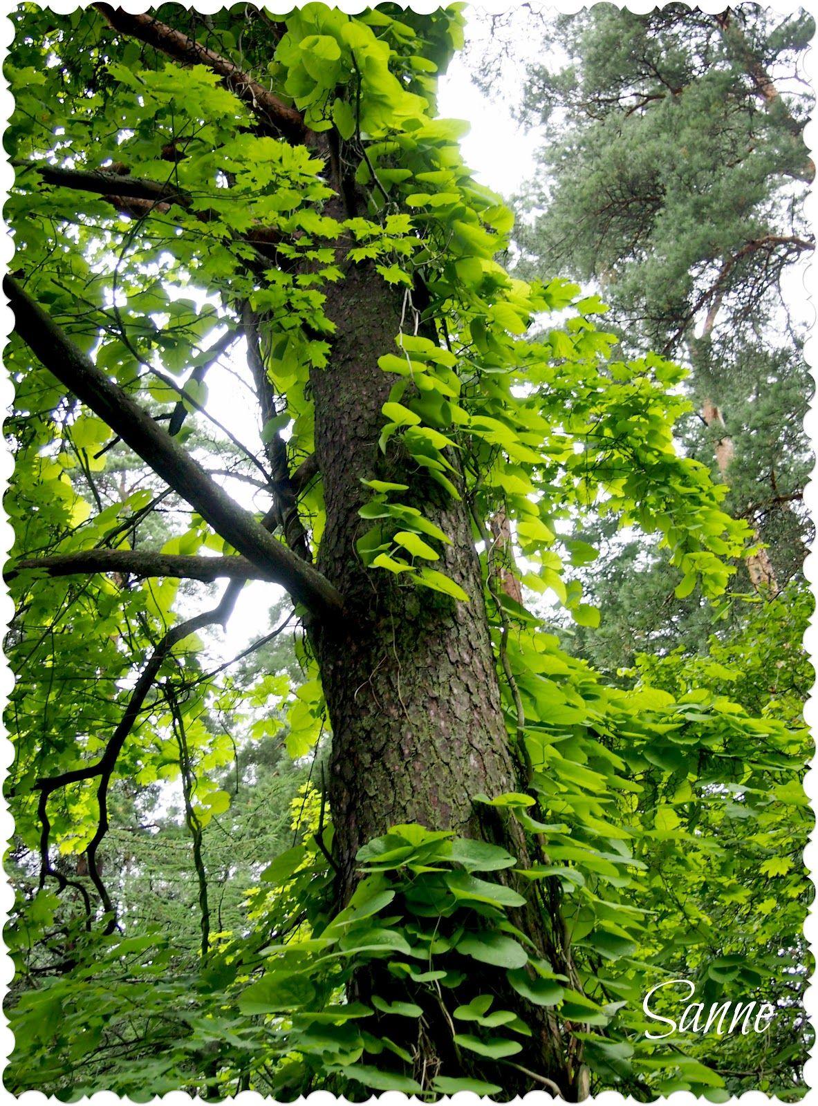 **Tartun hetkeen - I Seize the Day: Metsään kätketty, Mustila Arboretum - Hidden in the forest