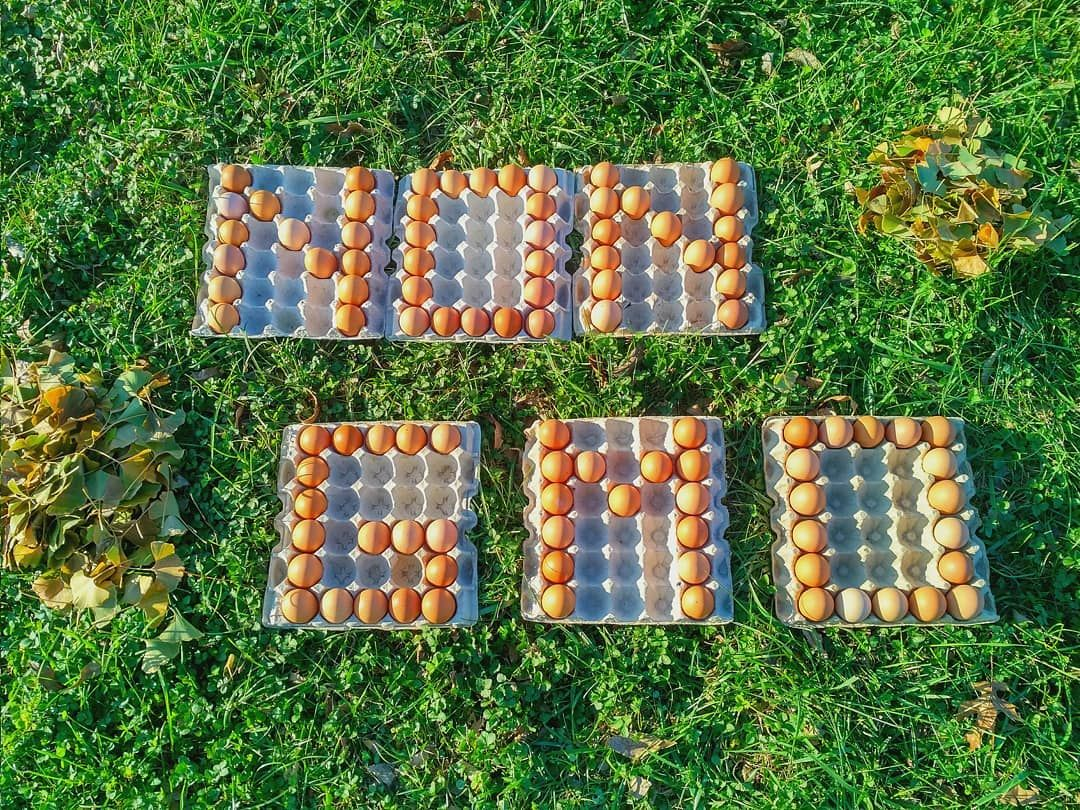 Eggs We all love emespecially when theyre the real deal without any kinds of modifications Look no further for your weekly eggs and holiday cooking ingredients 100 organi...