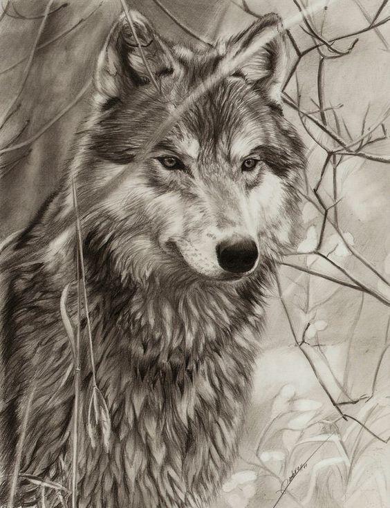 Открытки для, рисунок с волками