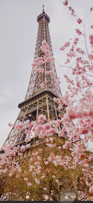 Paris Wallpaper In 2020 Paris Wallpaper Pink Paris Wallpaper Iphone Wallpaper Eiffel Tower