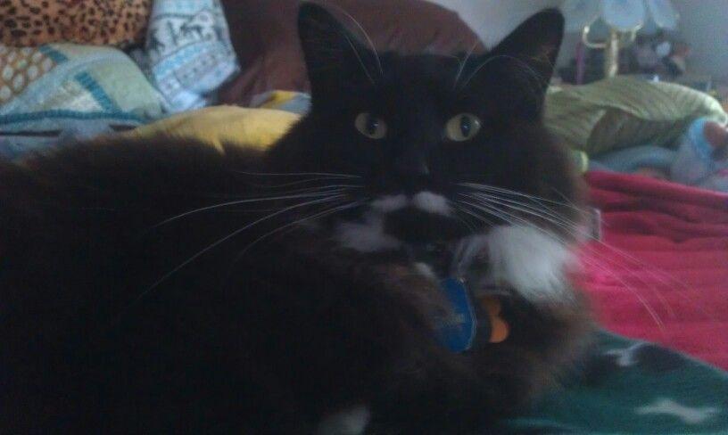 My sweet kitty Stachie.