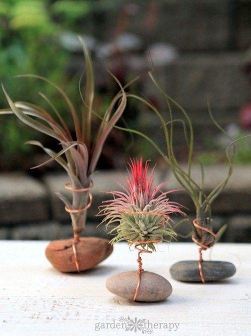Air Plants Planting Ideas Luftpflanzen Pflanzen Ideen
