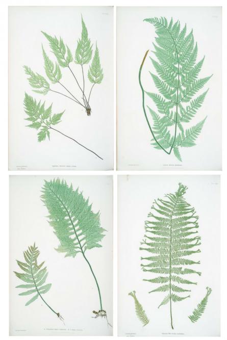 Free botanical art ready to print met afbeeldingen - Decorer sa maison virtuellement gratuit ...