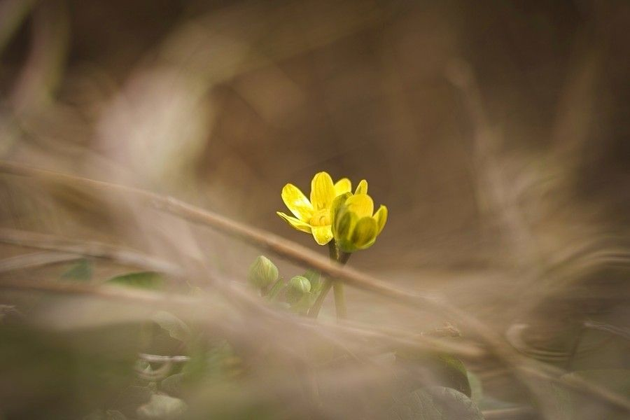 The first signs by Masaru Kuroda on 500px