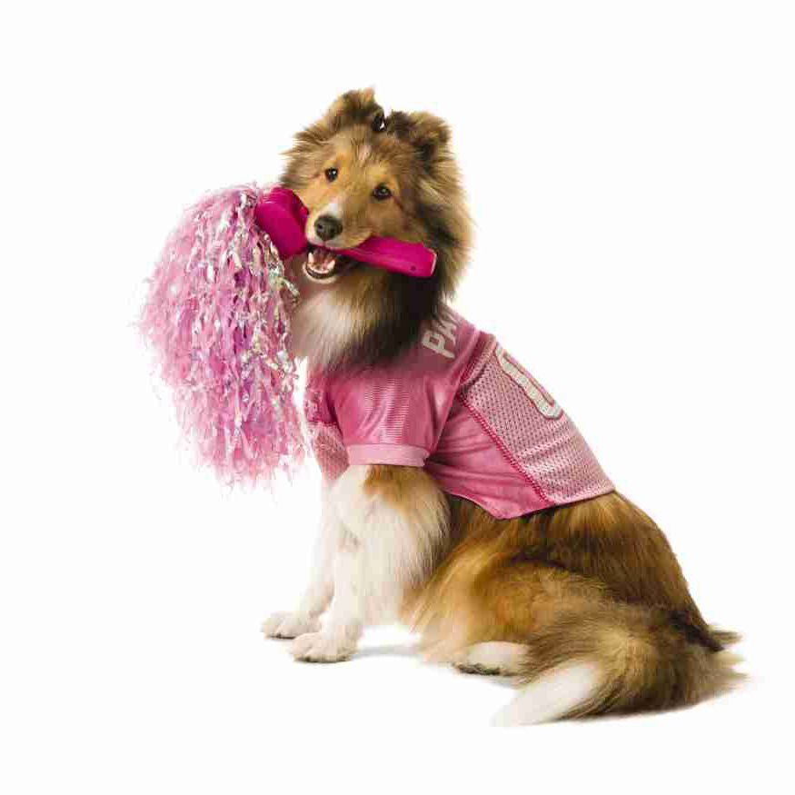 Celebrate your pet's favorite team! Shop our entire