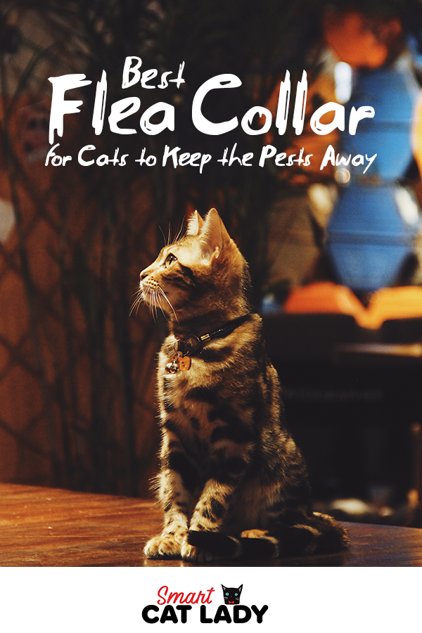 Best Flea Collar For Cats To Keep The Pests Away Cat Facts Cat Lovers Cats