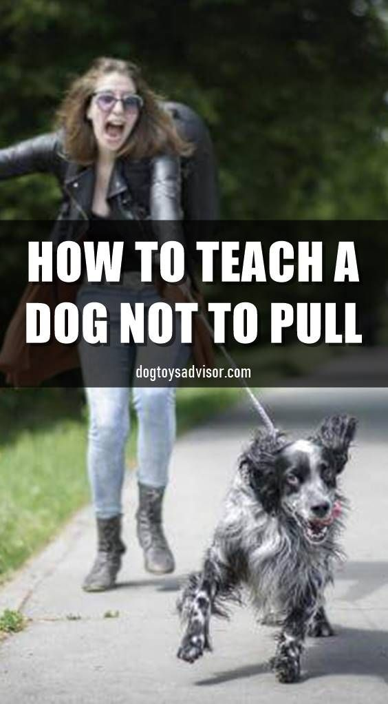 Do You Want Your Dog To Stop Pulling On The Leash Dogs Have A