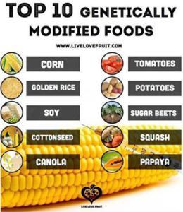 Top 10 Gmo Foods Genetically Modified Food Gmo Foods Food