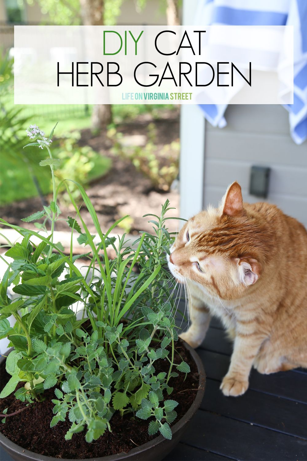 DIY Cat Herb Garden Cat plants, Cat garden, Herb garden