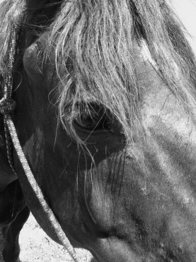 """About the head of a truly great horse there is an air of freedom unconquerable. The eyes seem to look on heights beyond our gaze. It is the look of a spirit that can soar.""  John Taunter Foote"