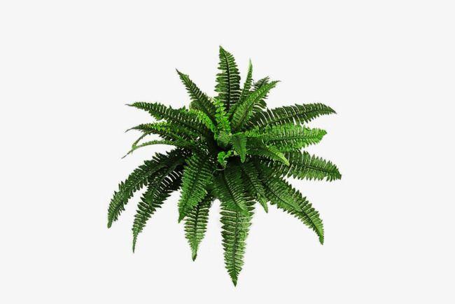 Arbusto,Las plantas verdes,Verde,La botánica,Decorar con flores y