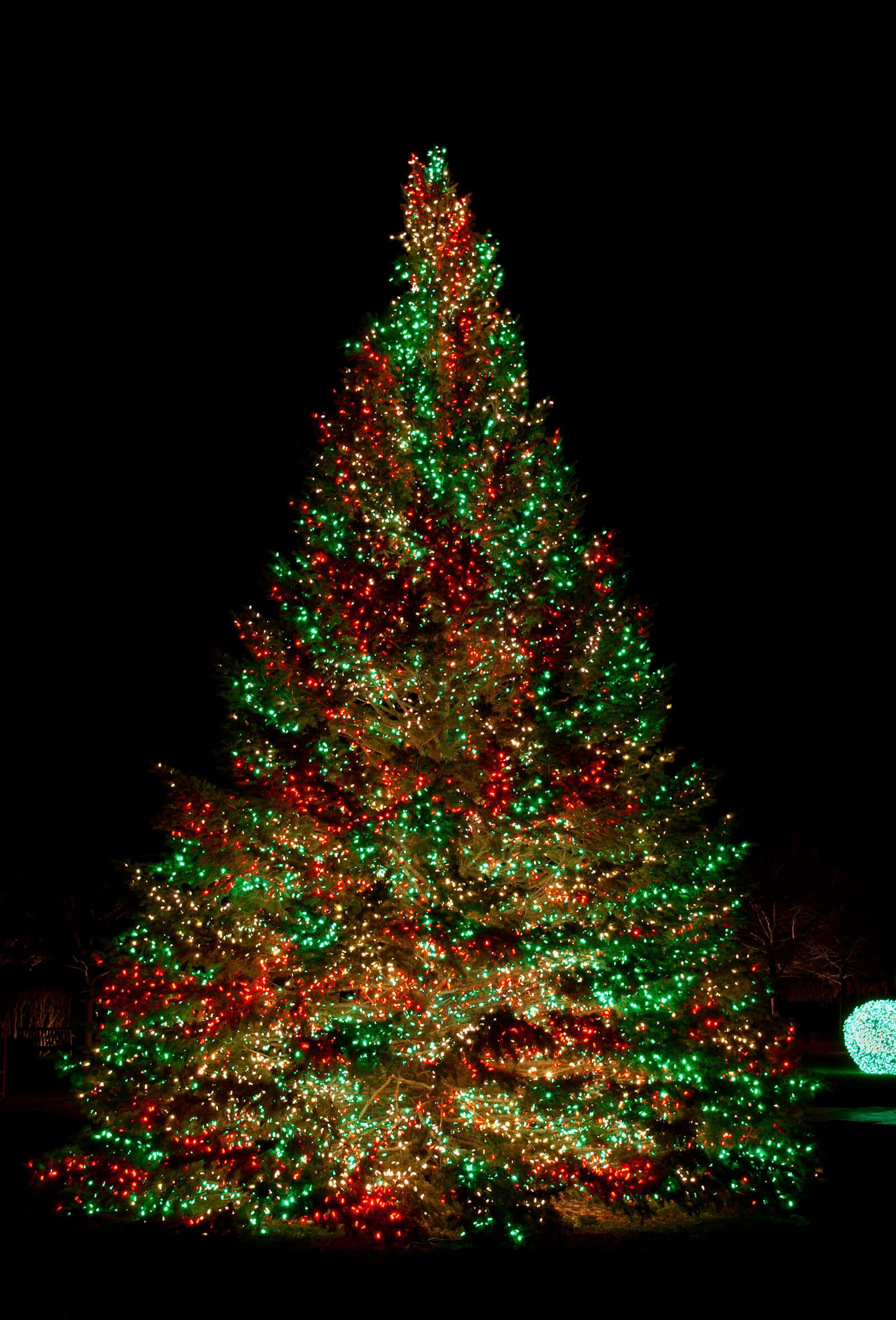 Best Christmas Tree Light Ideas That You Can Also Try At Your Home Outdoor Christmas Tree Cool Christmas Trees Beautiful Christmas