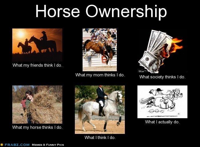 Horse Ownership Meme Generator What I Do Horses Horses