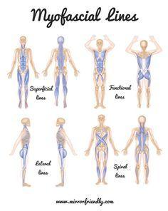 Pdf trains myers thomas anatomy