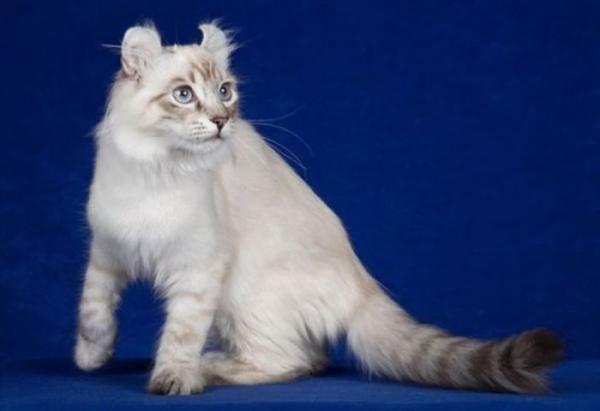 10 Gatos De Pelo Largo Gatos De Pelo Largo Razas De Gatos Y Gatos