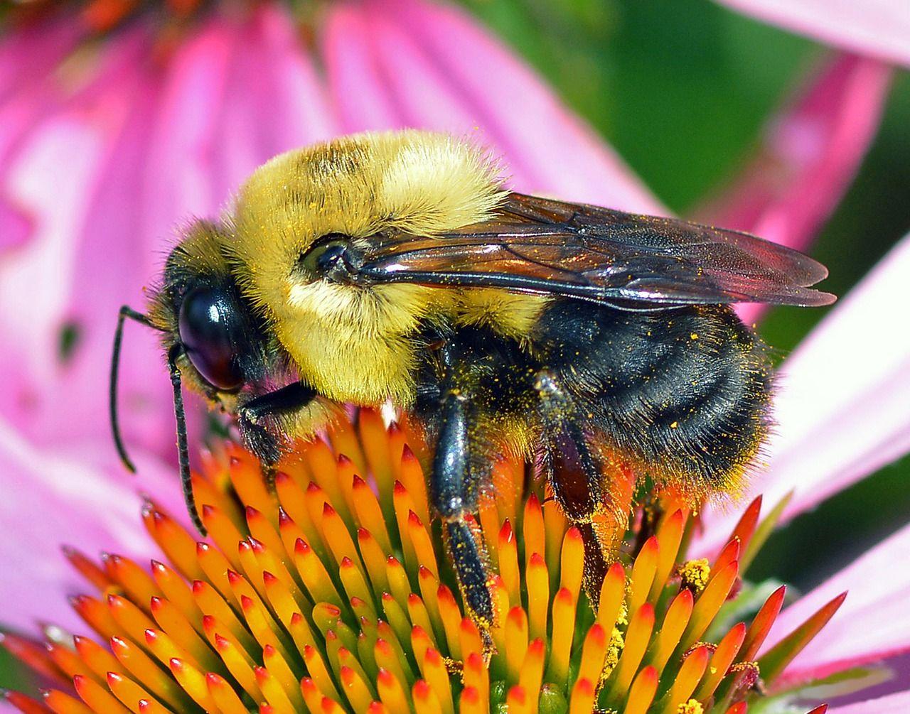 пчелы и шмели фото картинки после этого