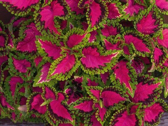 6 Plants That Thrive In Full Sun