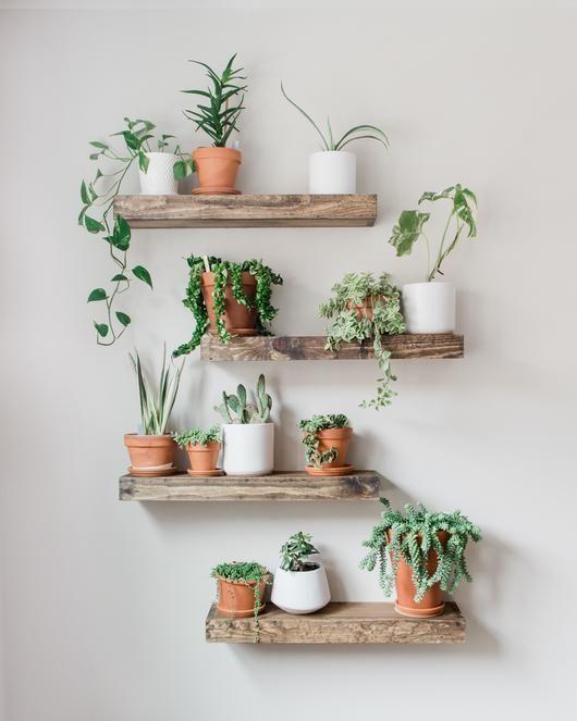 Home decor - 46 Amazing Wall Plants Decor For Cozy Living Room (3) Possible Decor homedecormodern |