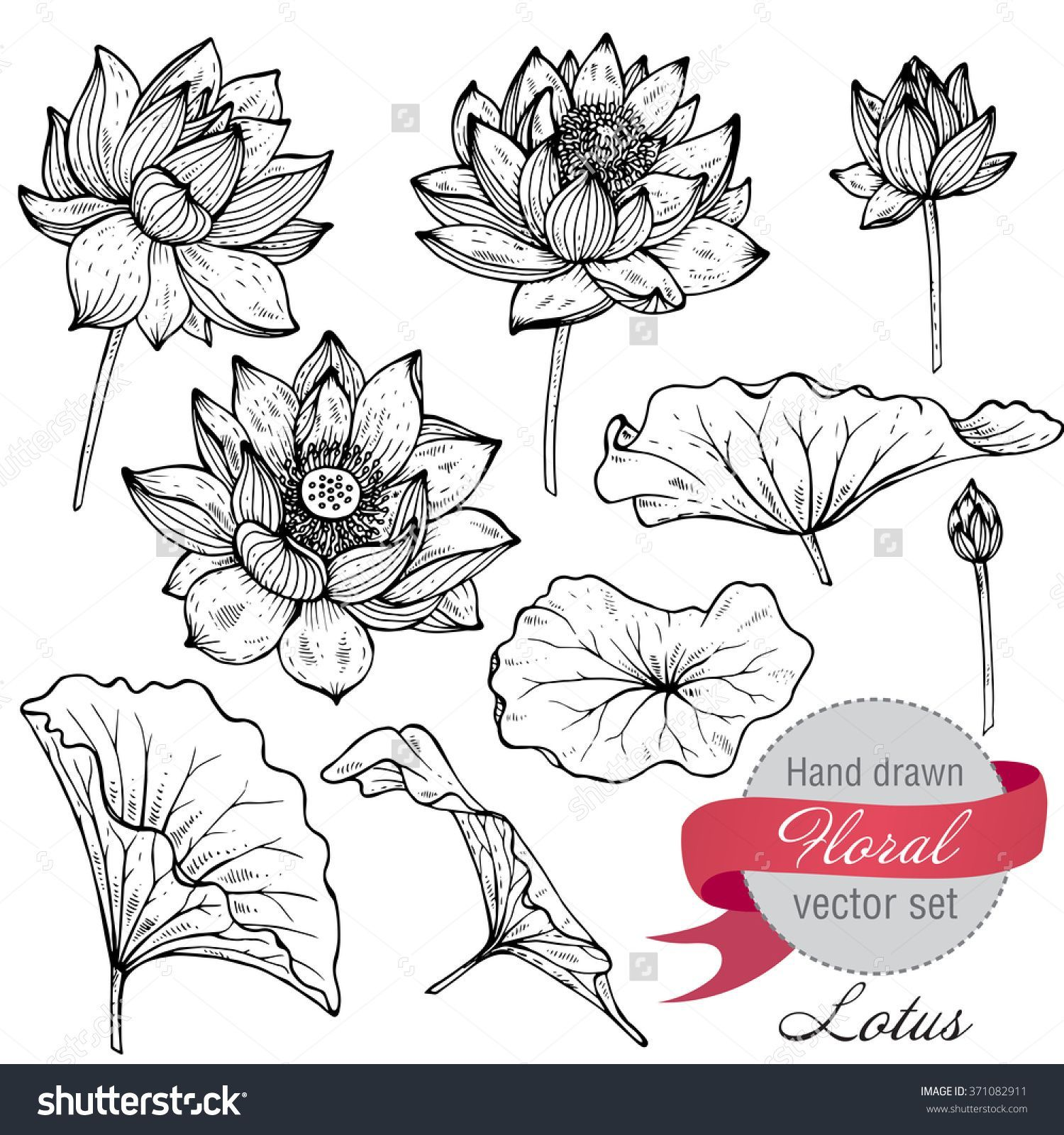 Vector Set Of Hand Drawn Lotus Flowers And Leaves. Sketch