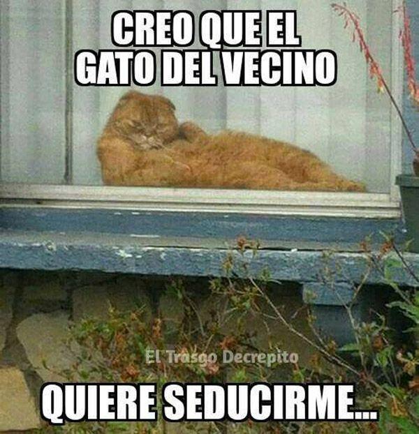 El Gato Del Vecino Fotos Divertidas De Gatos Meme Gracioso Gracioso
