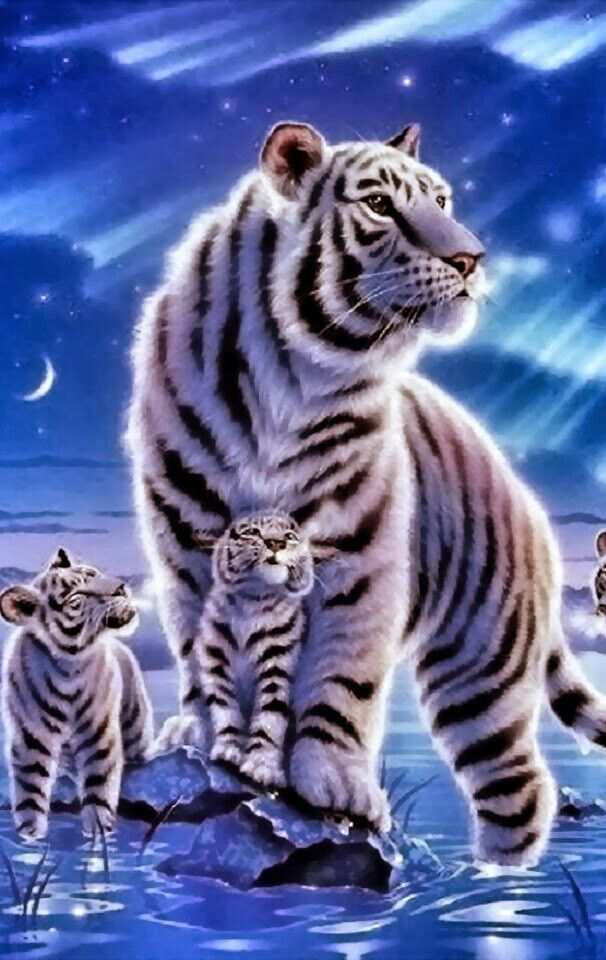 White Tiger Was White Kittens Cute Tigers Tiger Wallpaper Cute Animals