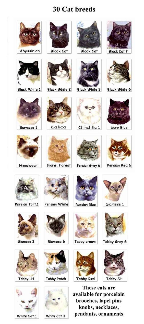 Unusual Cat Breeds or different kinds of cats. There so