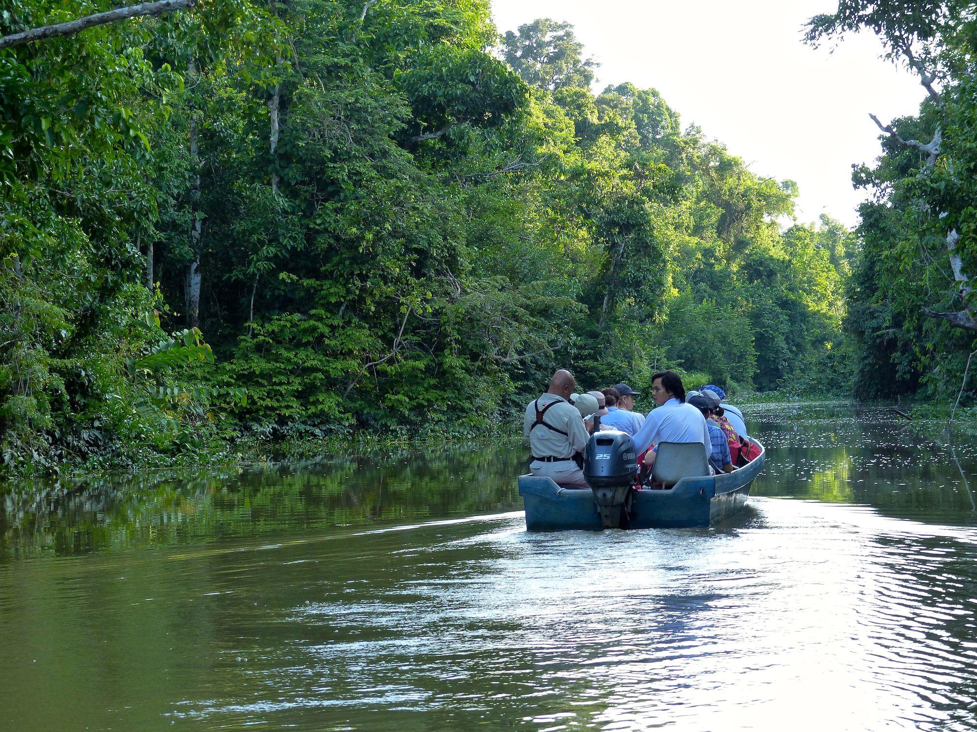 River, Sukau, Borneo