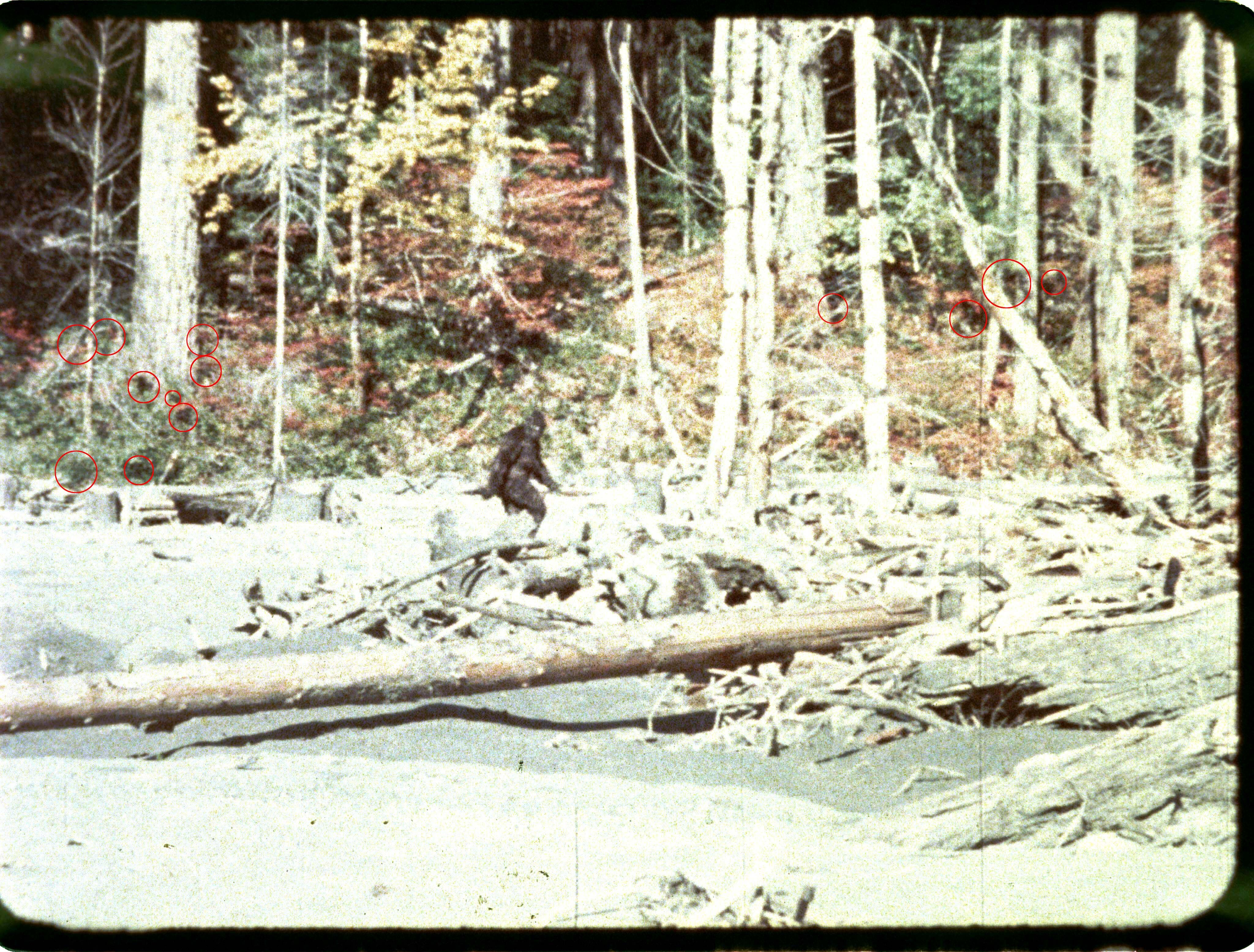 Most famous image from the short film shot by roger for Patterson woods