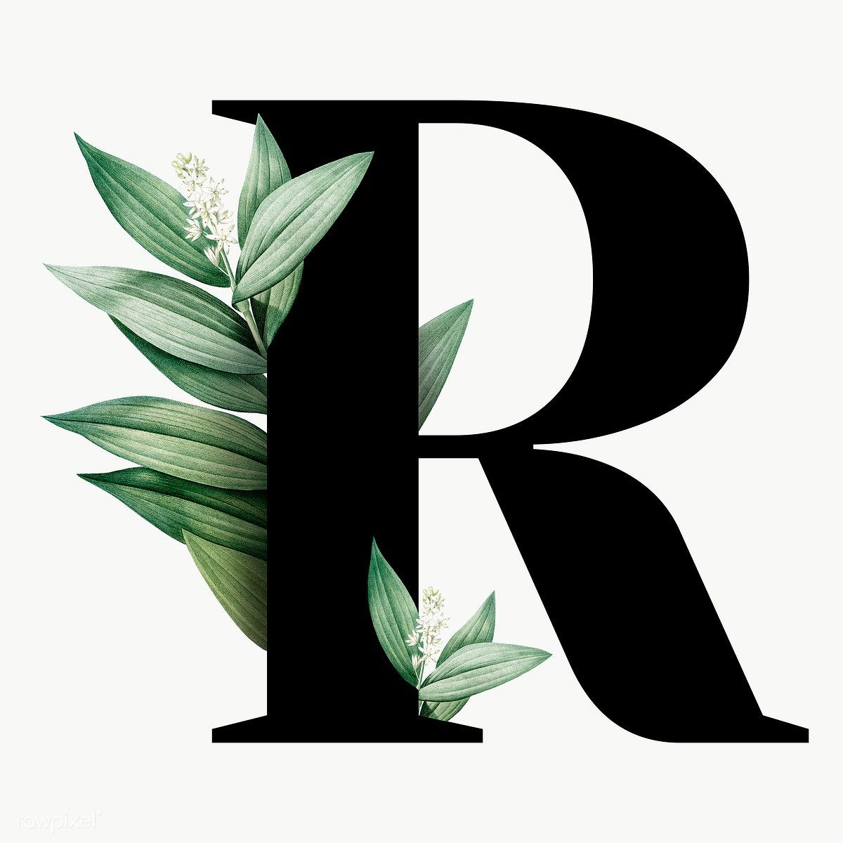 Botanical Capital Letter R Transparent Png Premium Image By Rawpixel Com Aum Lukisan Huruf Foto Abstrak Menggambar Kaktus