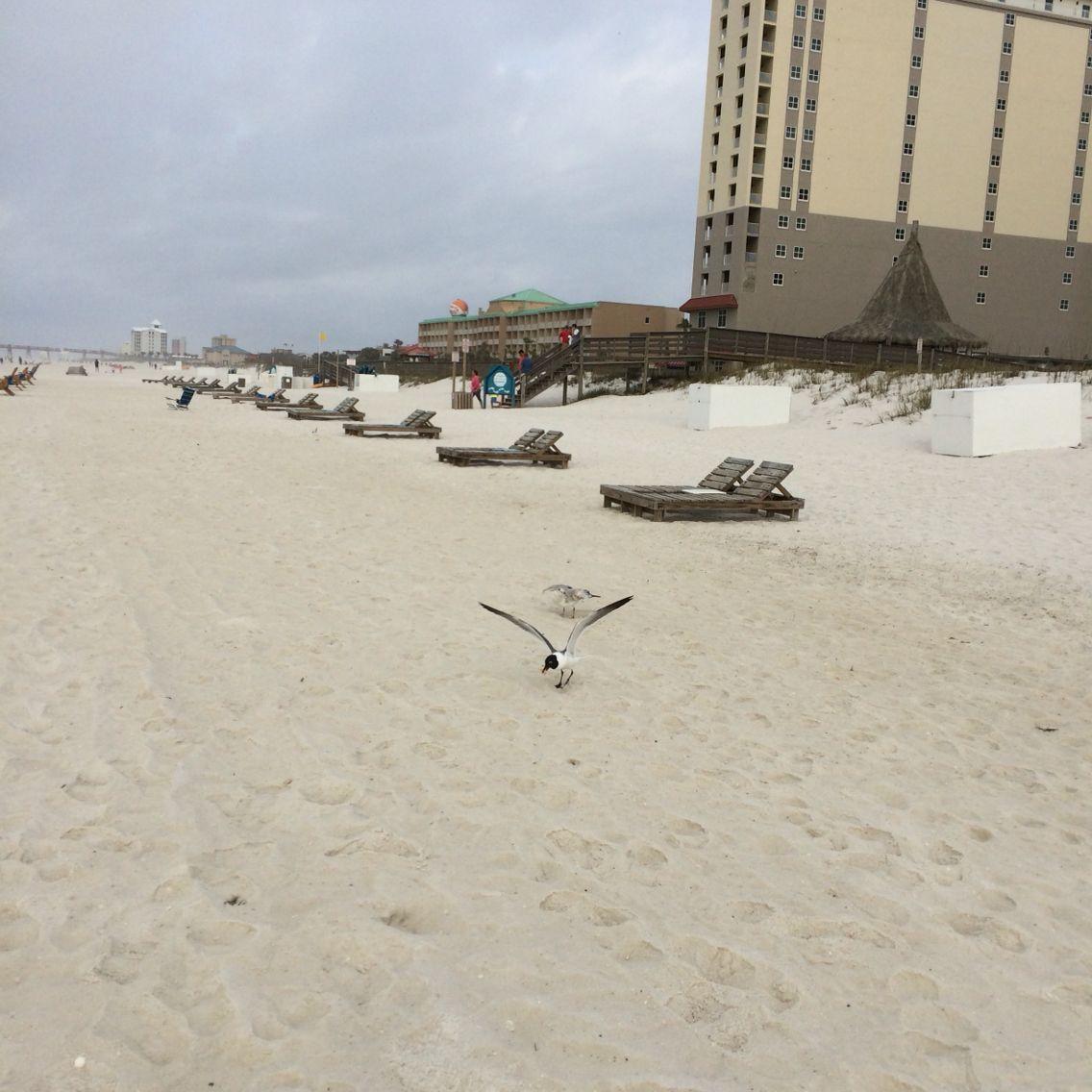 Pensacola Beach front...