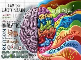 Resultado de imagen para maqueta de los hemisferios cerebrales