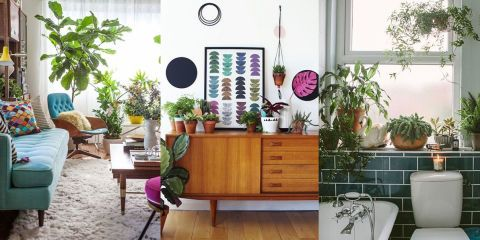 18 modi per usare le piante e trasformare la tua casa in ...