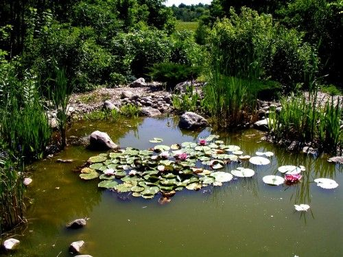 Water feature without pond filters or pond pumps camp for Natural koi pond