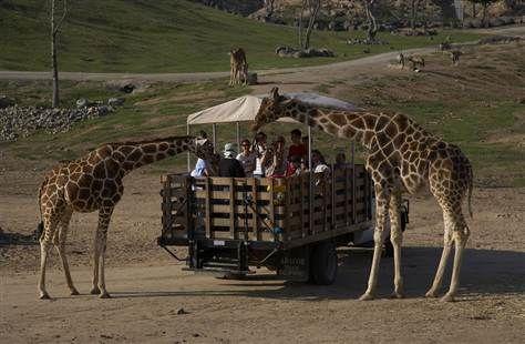 Msnbc News Video And Progressive Community Lean Forward San Diego Zoo Safari Park Wild Animal Park Safari Park