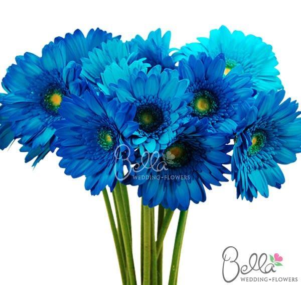Blue Gerbera Daisies Bridal Bouquet Blue Blue Wedding Bouquet Small Bridal Bouquets