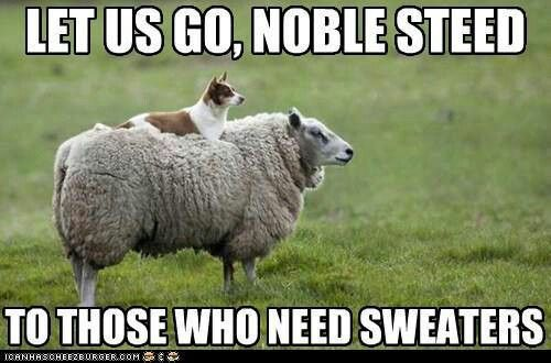 Noble steed!