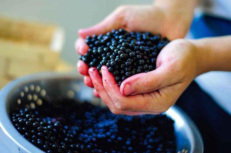 Prawdziwy Syrop Z Owocow Bzu Czarnego Food Cooking Fruit