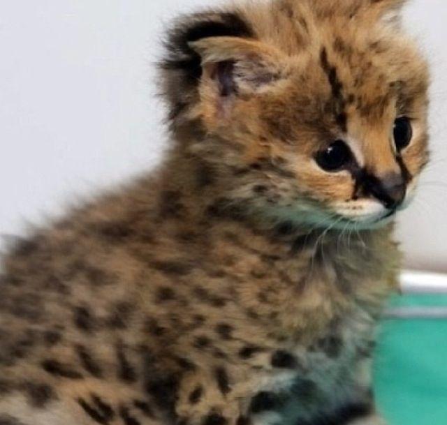 Kitttyyyy