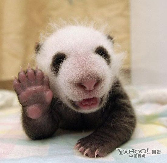 Hi Its Me Again A Darn Cute Animal Here To Tell You That Once You - 30 cutest pictures ever babies posing animals