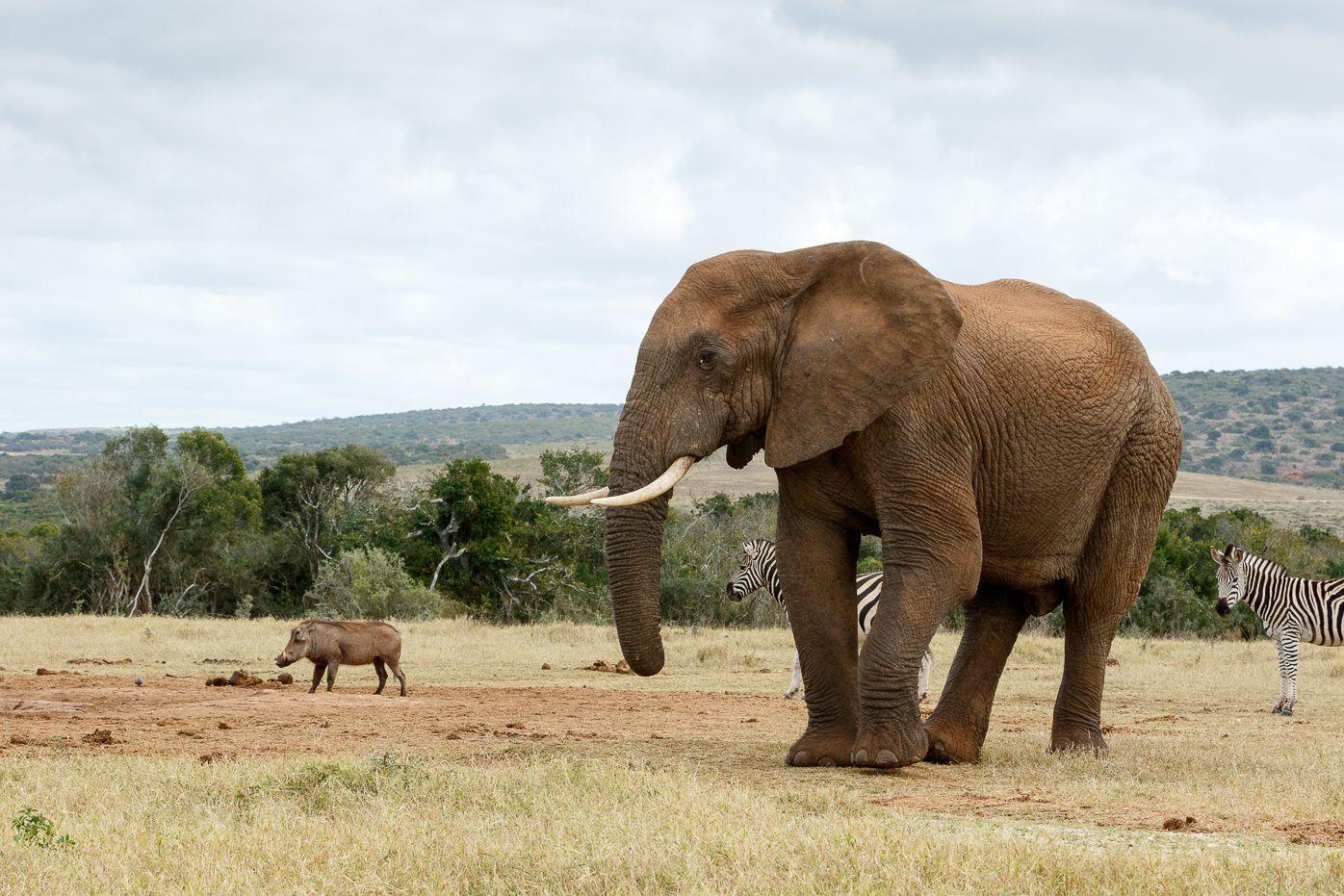 los animales más grandes del mundo