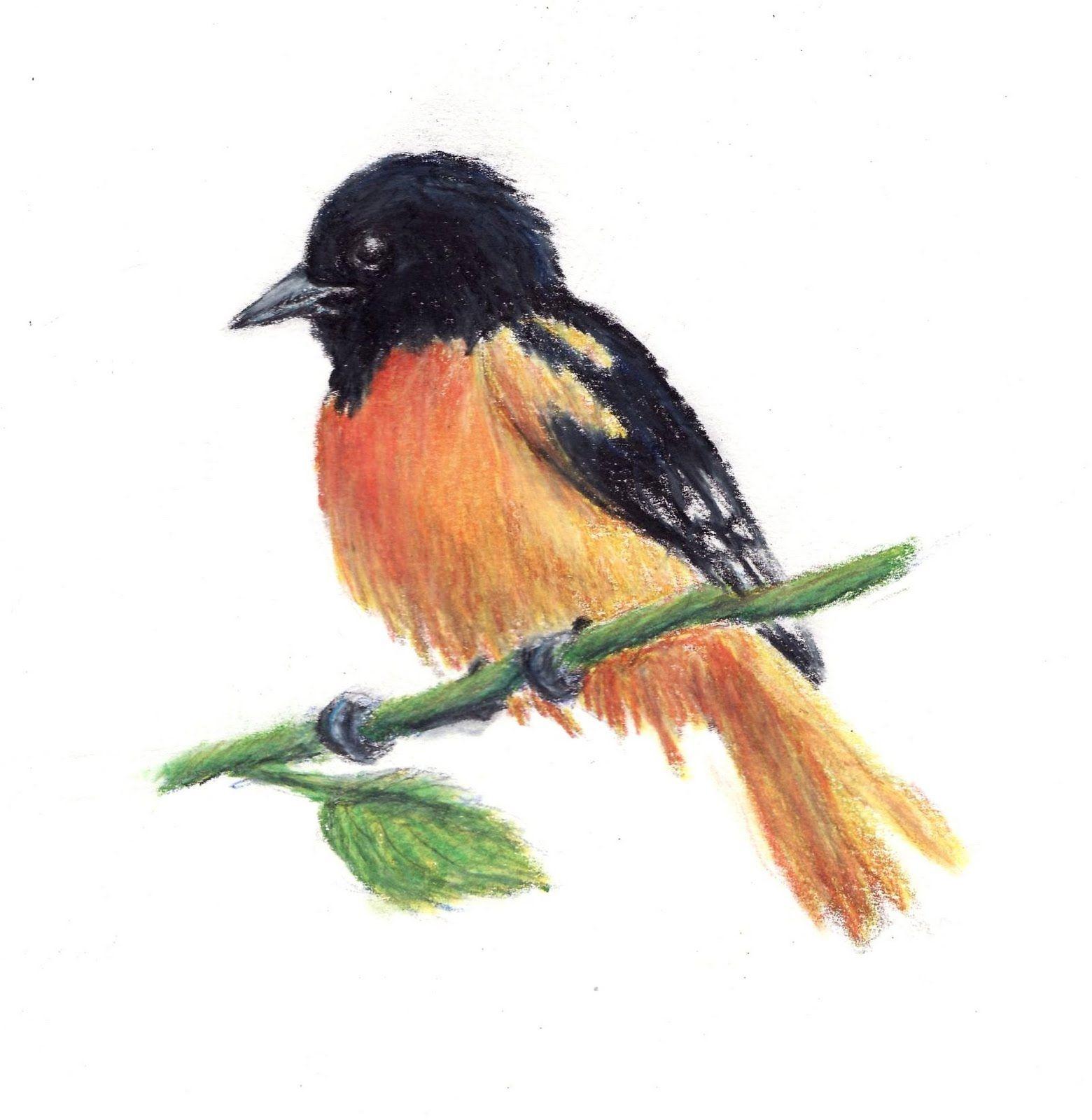 Color Pencil Sketches Of Birds