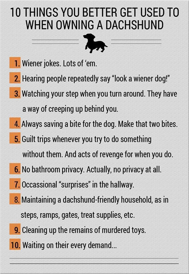 """""""10 things you better get used to when owning a Dachshund.""""  Or, when they own you."""
