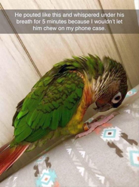 New Funny Cute 32 Funny and Cute Animal Pictures Of The Day | FallinPets 32 Funny and Cute #Animal Pictures Of The Day! 2