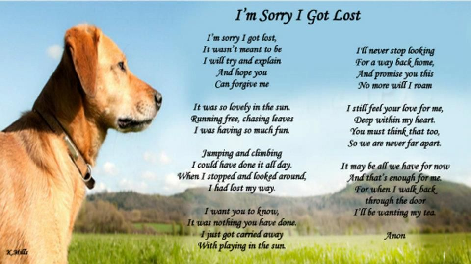 Amazing Poem About A Lost Dog Losing A Dog Best Poems Animal Poems
