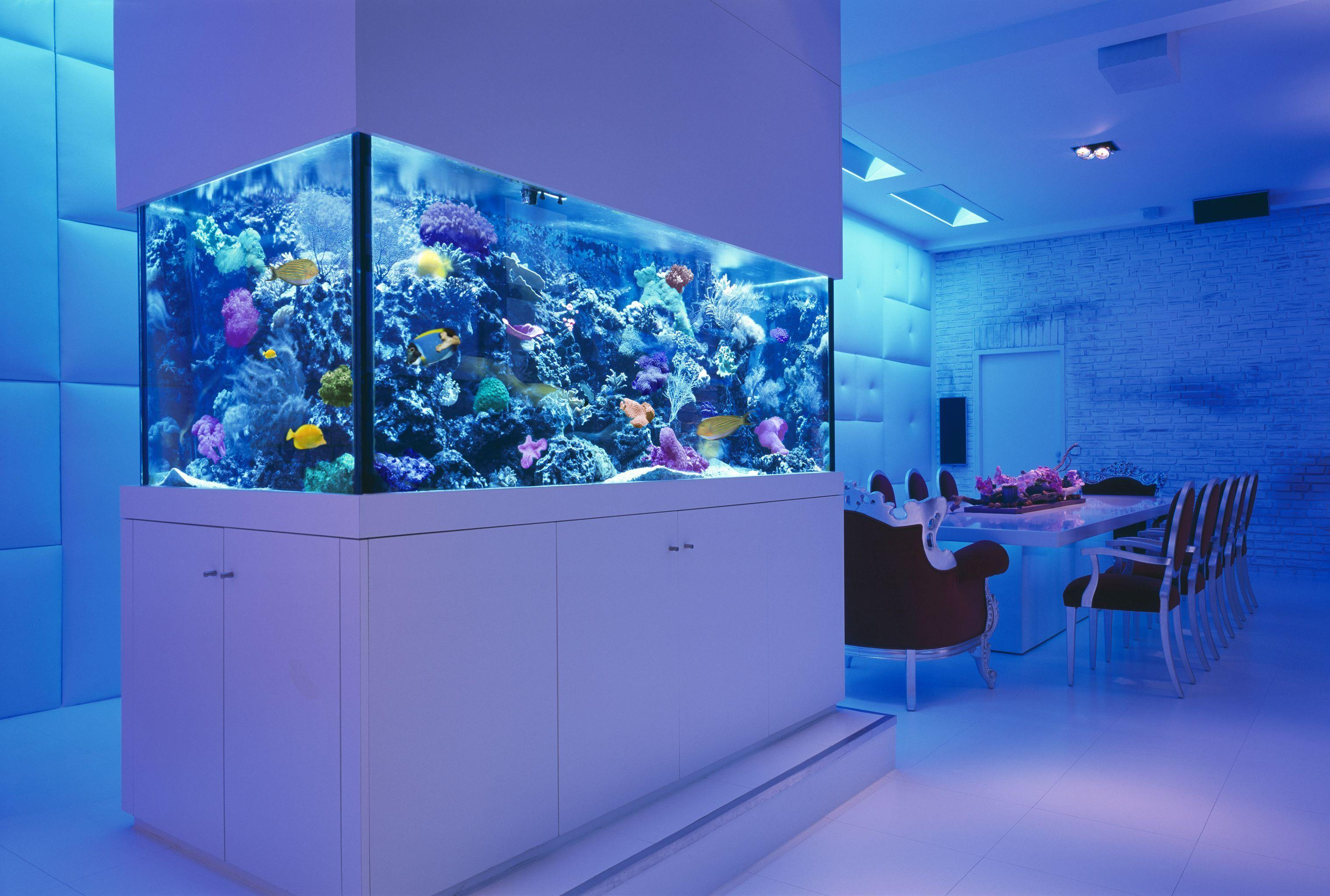 Luxury apartment with giant aquarium Aquarium
