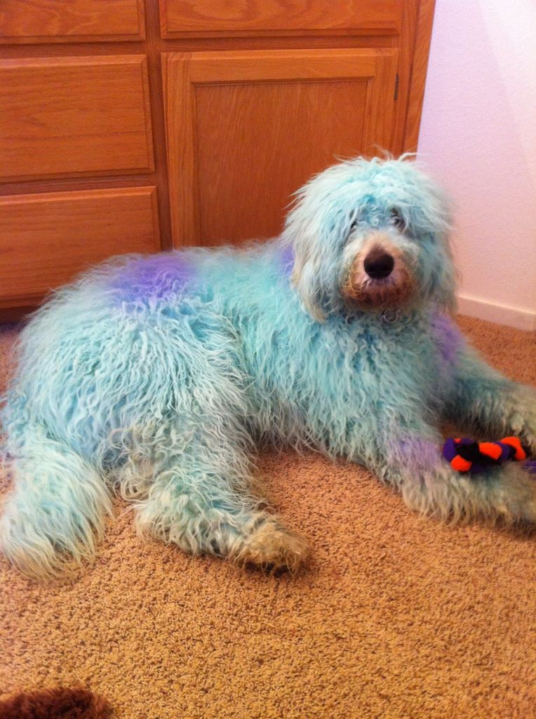 charlies halloween costume :) sully | My fur friends ...